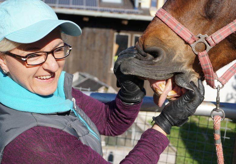 Kreislaufkontrolle beim Pferd