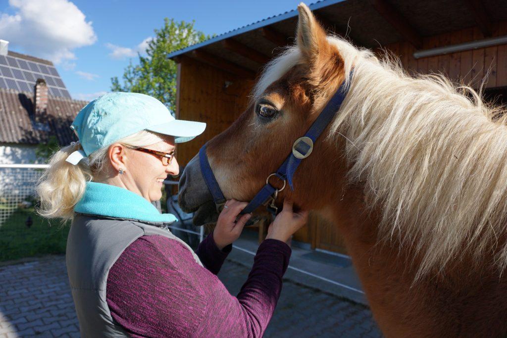 Pulskontrolle beim Pferd