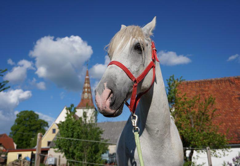 Sonnenbrand beim Pferd