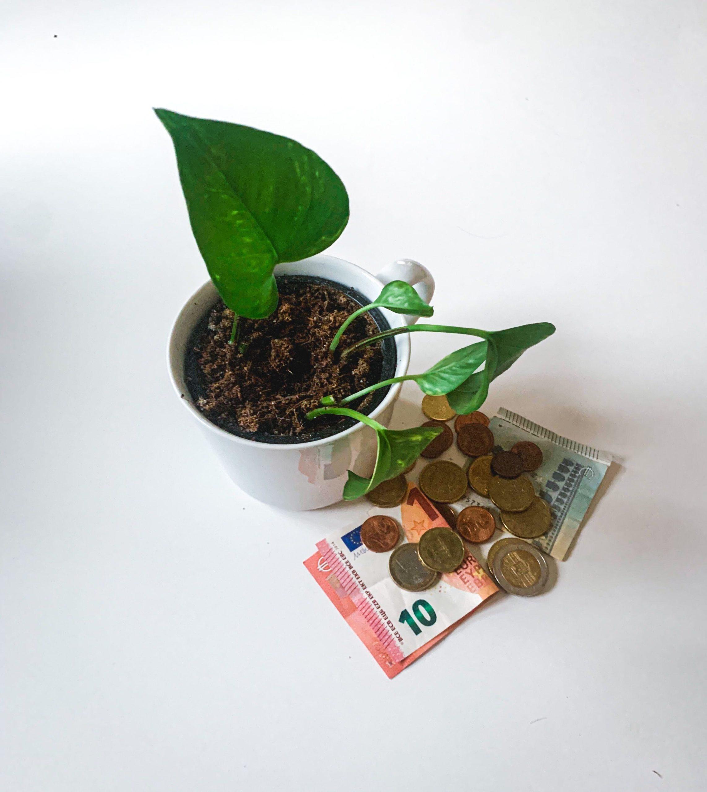 Pflanzen Spartipps