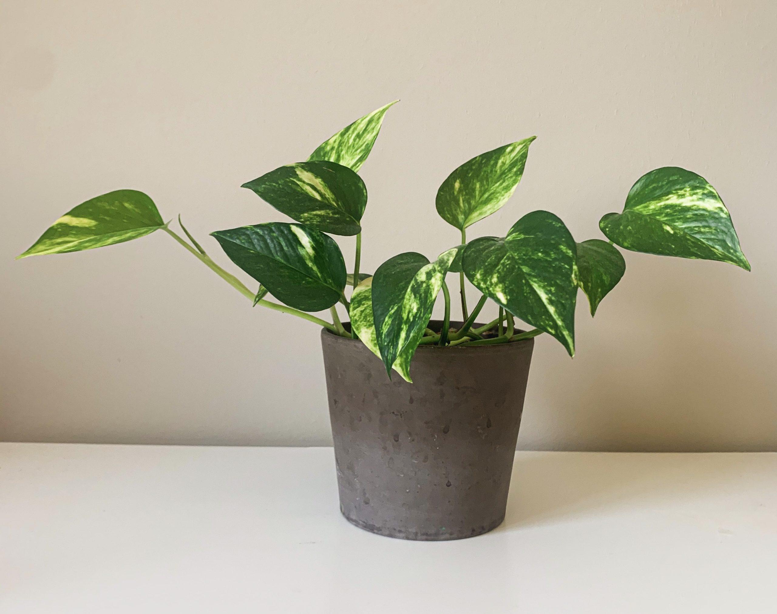 Pflanzen für Anfänger