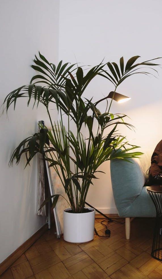 Zimmerpflanzen, die mit wenig Licht auskommen