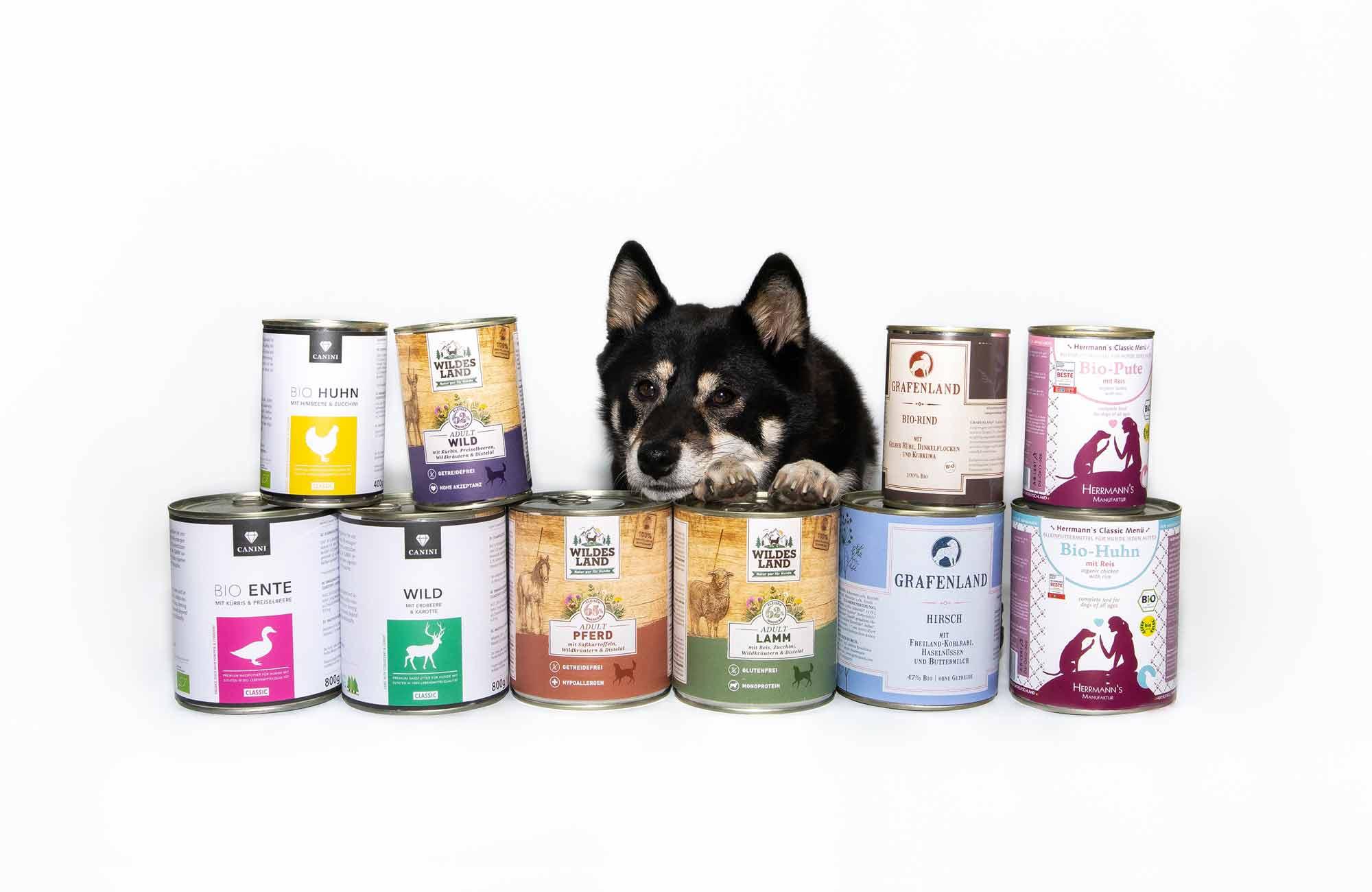 süßer Mischlingshund wartet zwischen leckeren Nassfutterdosen auf seine Belohnung von PfotenImBiss