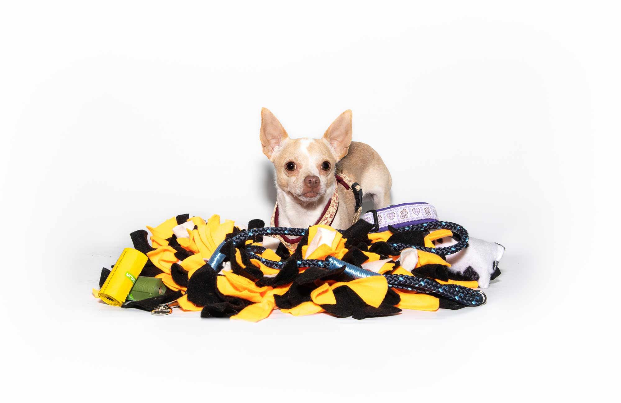 kleiner süßer Hund inspiziert das umfangreiche Zubehör-Sortiment von PfotenImBiss