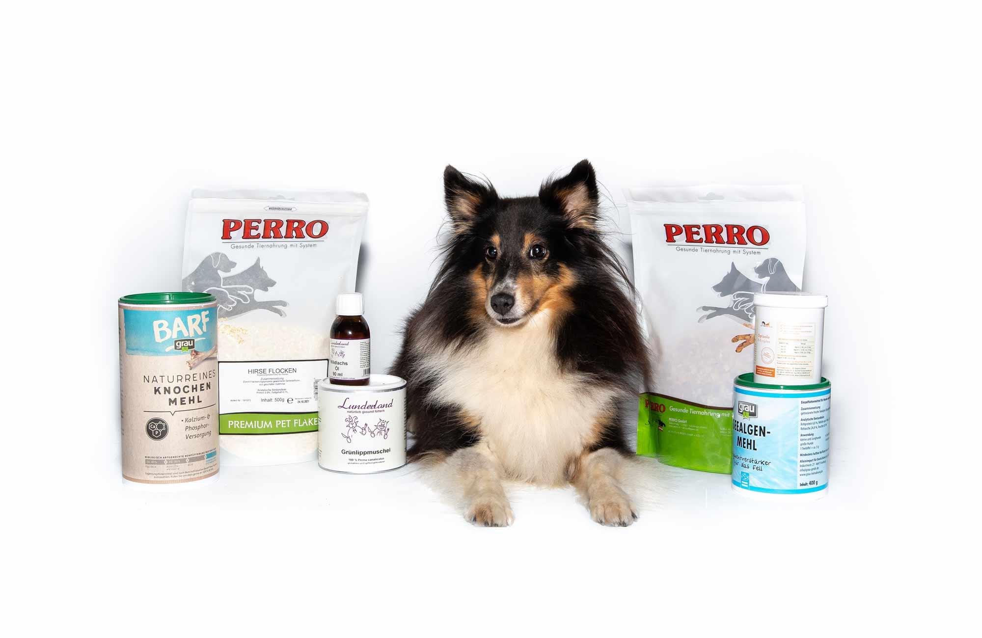 entzückender Hund liegt zwischen den wertvollen Futterzusätzen von PfotenImBiss