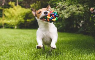 PfotenImBiss Foto Hund mit Spielzeug