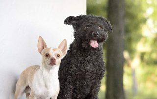 PfotenImBiss zwei süße Hunde
