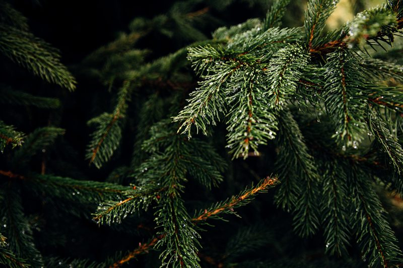 How to clean up Christmas Tree Pine Needles