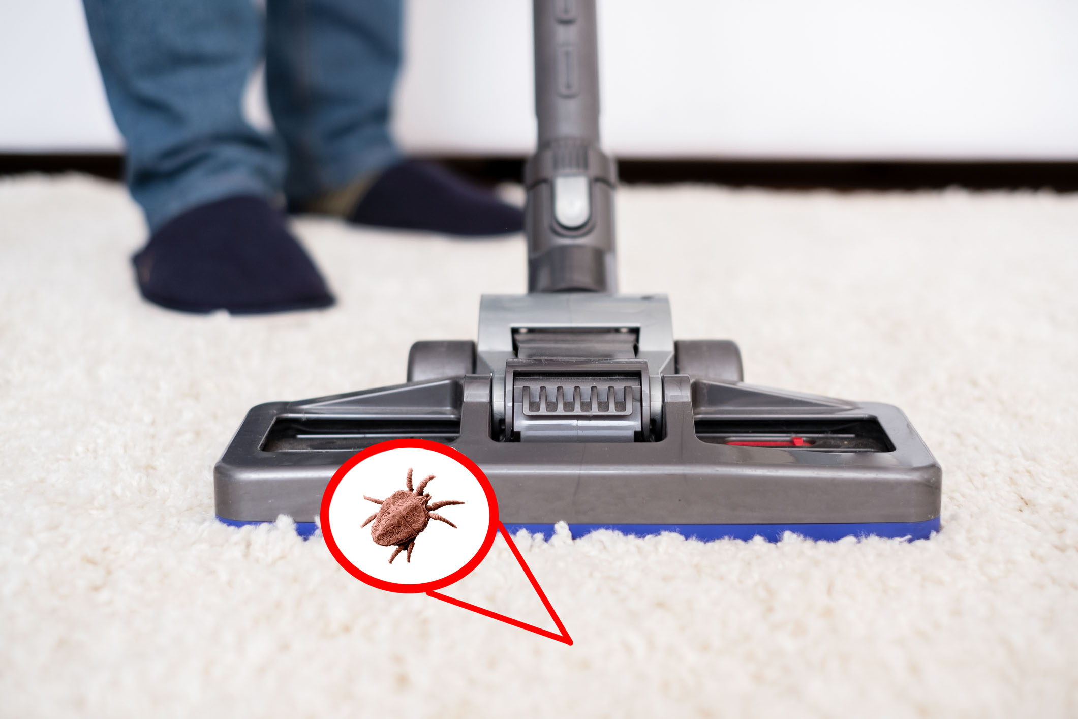 Can Vacuuming kill Fleas?