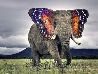 Bonkers new animals imagined with the power of Photoshop image 11