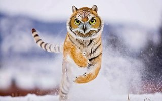 Bonkers new animals imagined with the power of Photoshop image 13
