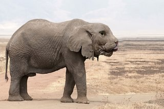 Bonkers new animals imagined with the power of Photoshop image 16