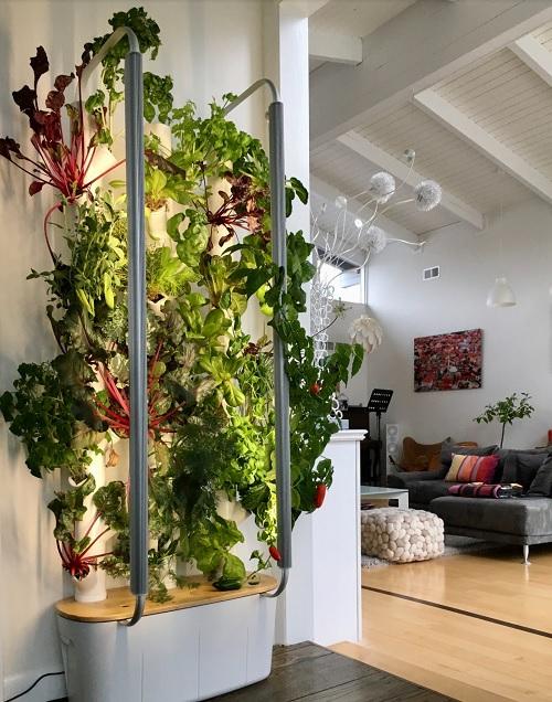 Gardyn lets you grow vegetables indoors.