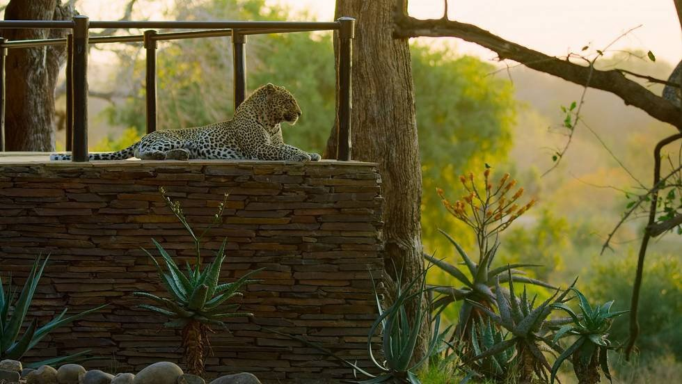 David Attenborough narrates