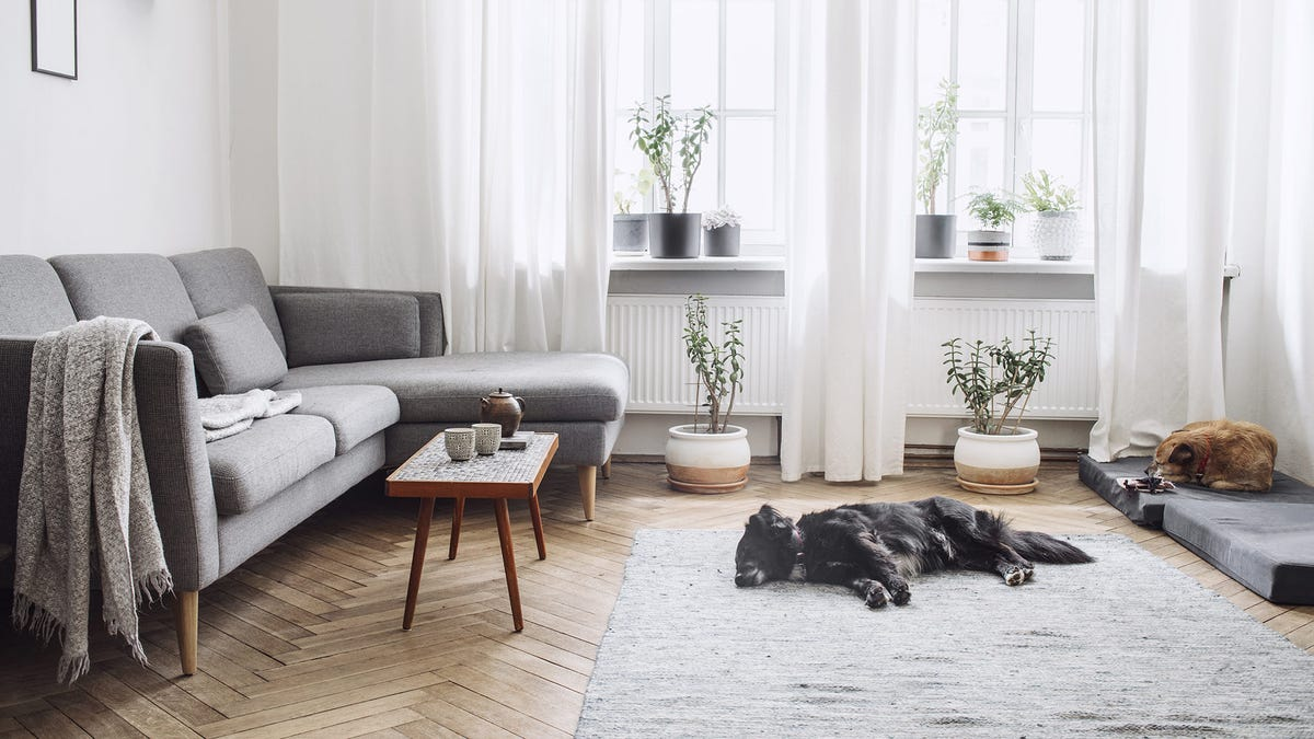 A sunny living room with stylish modern furniture and two dogs sleeping in the sunshine.