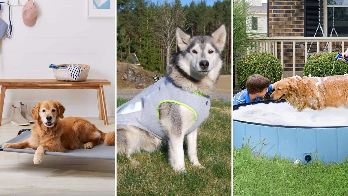 A lab mix dog sitting on an elevated bed, a husky dog wearing a gray harness, and a boy bathing a retriever in a pool.
