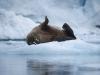 Resa till Svalbard, Kristian Gärdsborn