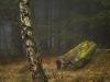 Skogens konstverk