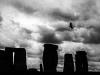 Korpen vid Stonehenge