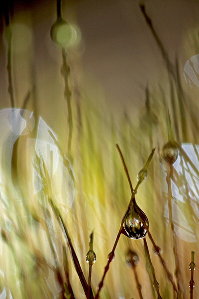 Mossa och vattendroppe