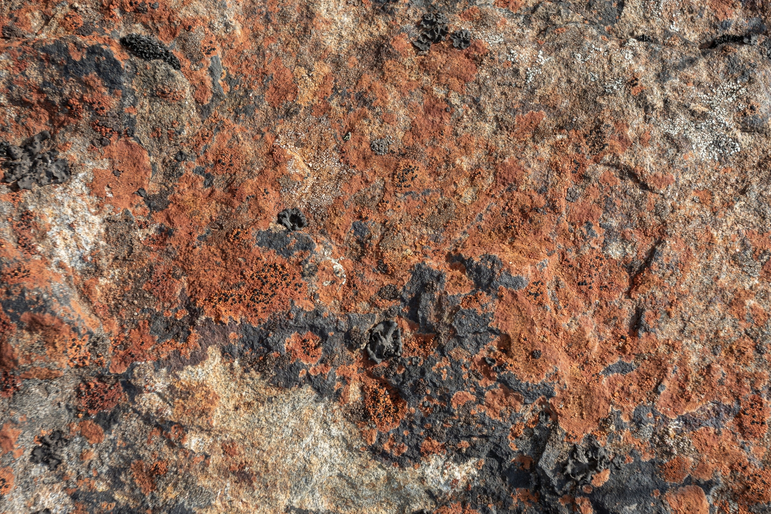 Wallpaper and texture photo