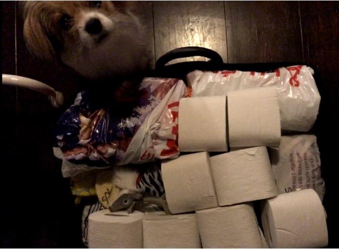 Visar hur toarullar ligger i väskan