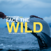 Face The Wild by Natural High.one