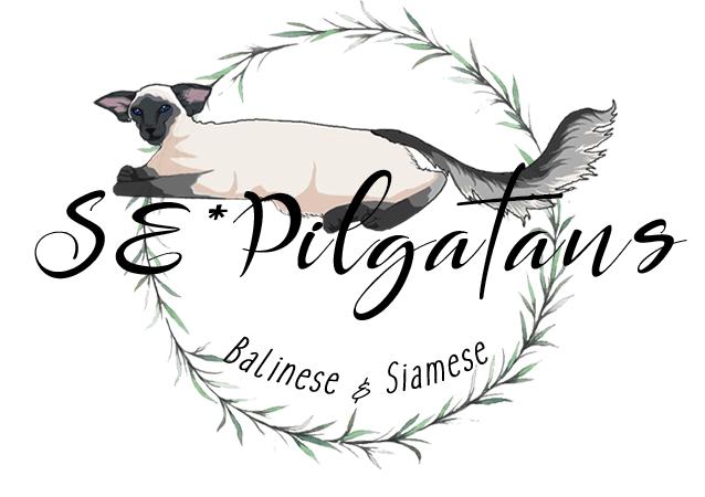 SE*Pilgatans