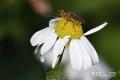 turnhouts-vennengebied_0166