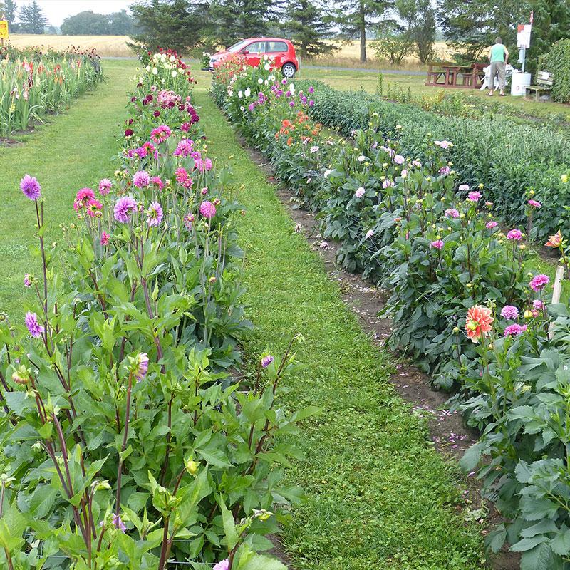 Blomstermark med Plukselv Blomster