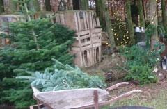 Fæld-selv juletræer