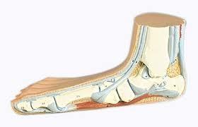 platvoet (pes planus) en doorgezakte voeten