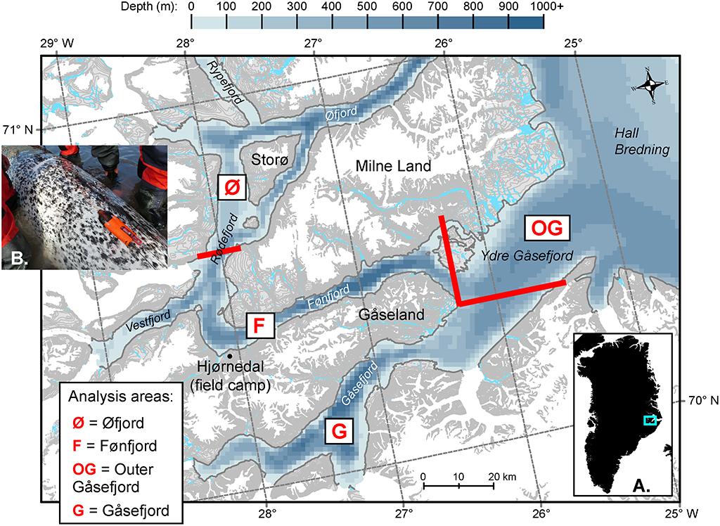 Området i den inderste del af Scoresbysund ved Hjørnedal, hvor arbejdet med narhvalerne foregår (kilde: Blackwell et al., 2018).