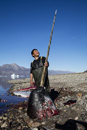 Fanger med narhvalstødtand i Scoresbysund, Østgrønland (foto: Carsten Egevang).