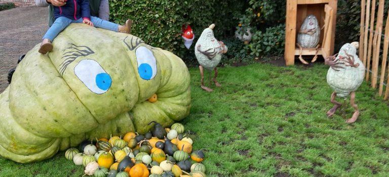 TikTok #pumpkinchallenge Kasterlee