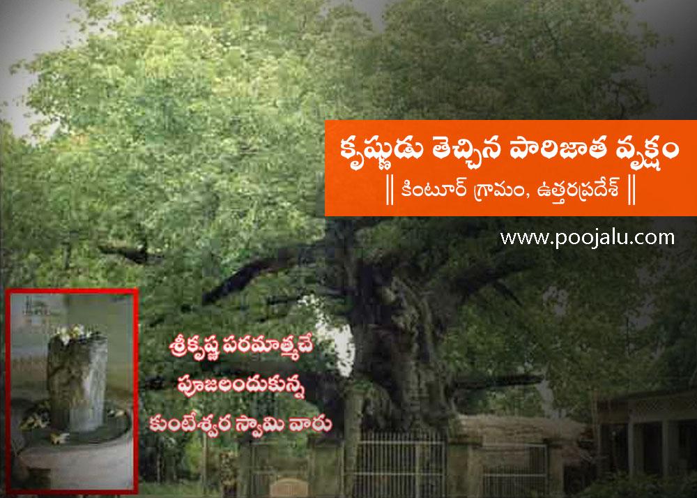 original-parijata-tree
