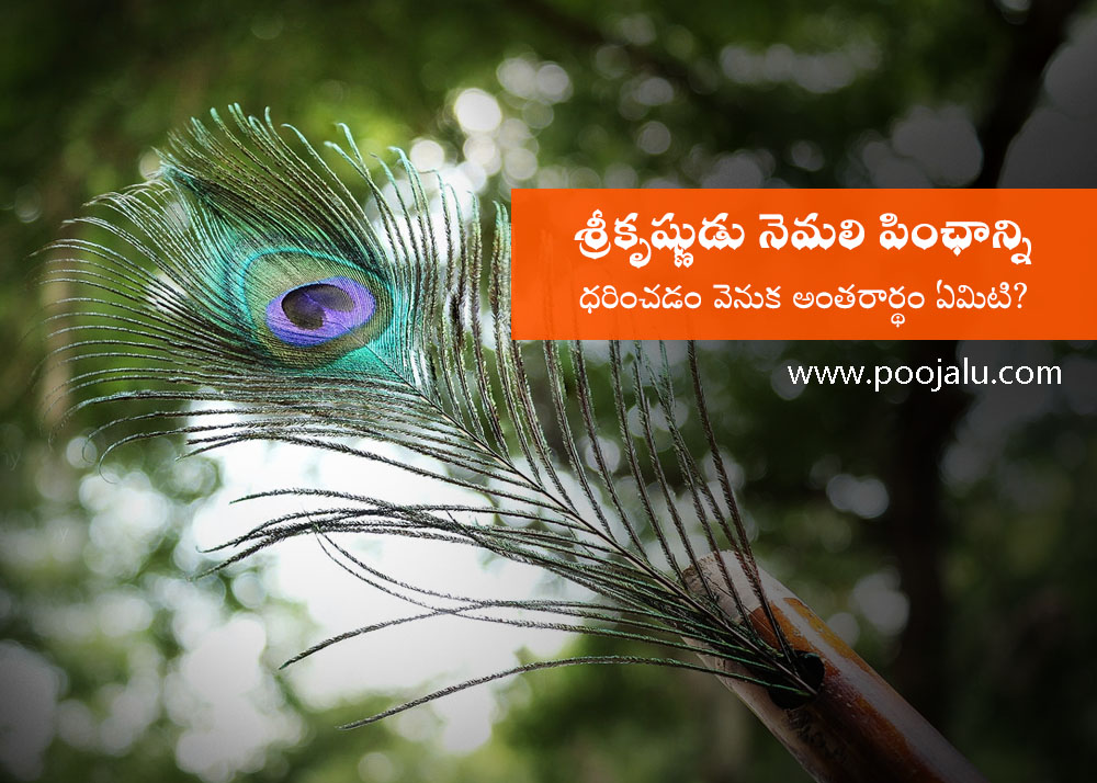why-lord-krishna-wears-peacock-feather-on-his-head