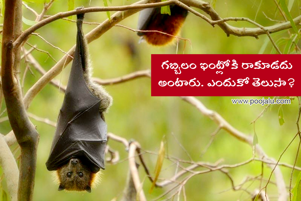what will happens if bat enters the house
