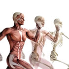 Musculo-Skeletal Physiotherapy Porthcawl