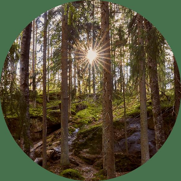 Metsämieli