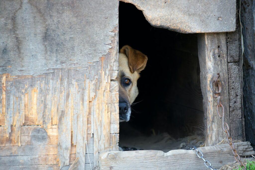 Hvad koster hundetræning?