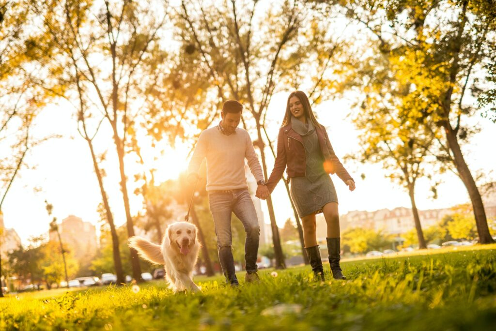 Hundetræning og hvalpetræning priser
