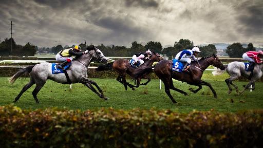 horse racing predictions