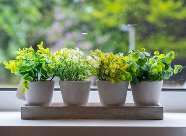 plants on a windowsill
