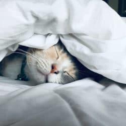 Online begeleiding bij slapeloosheid dmv psycholoog