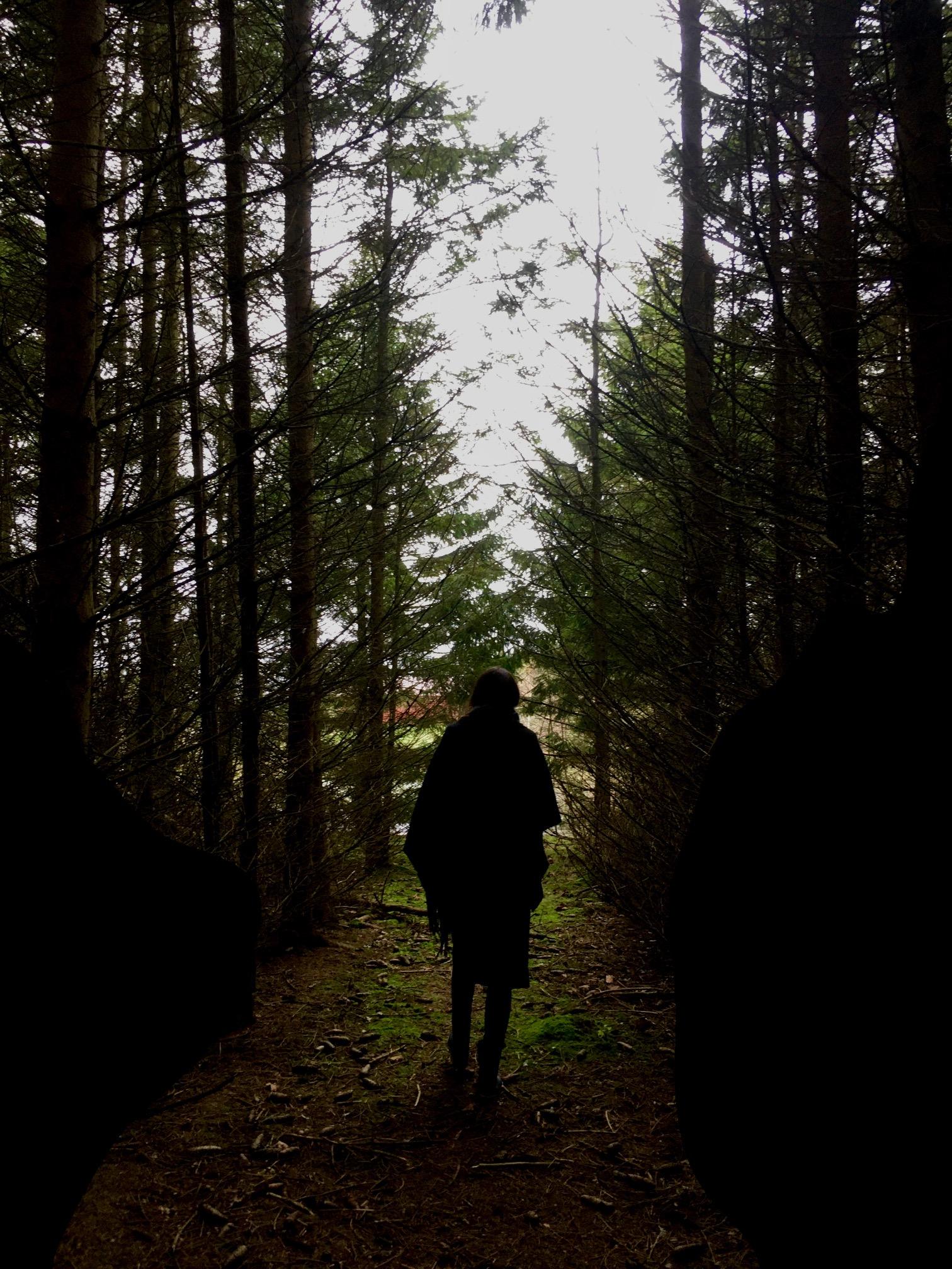 Stilheden i skoven. Duften og blødheden der omslutter dig. Skovbadning og egen bæredygtighed som supervision rettet mod autorisation hos Psykologen på Landet, autoriseret psykolog Karina Thomsen.