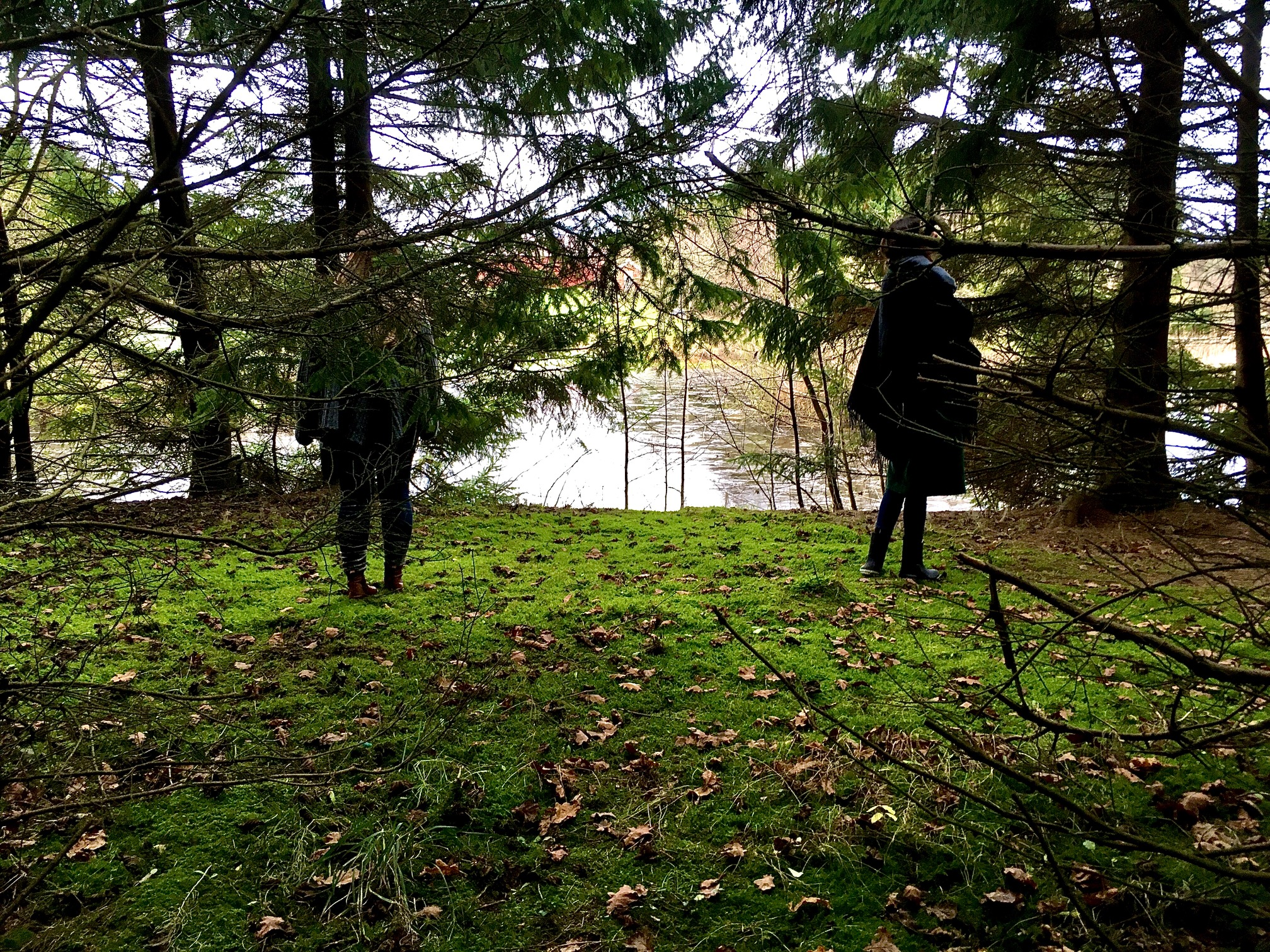 Gå på opdagelse i skoven. Skovbadning som supervision. Supervision i naturen.  Supervisionsgruppe ved autoriseret psykolog Karina Thomsen, Psykologen på Landet, Odder.