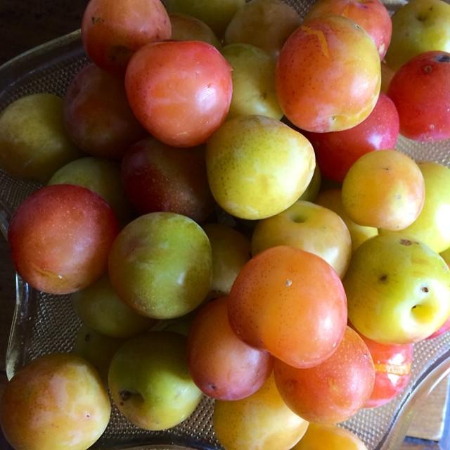 Virgin Prunes #summer 2014 #italy