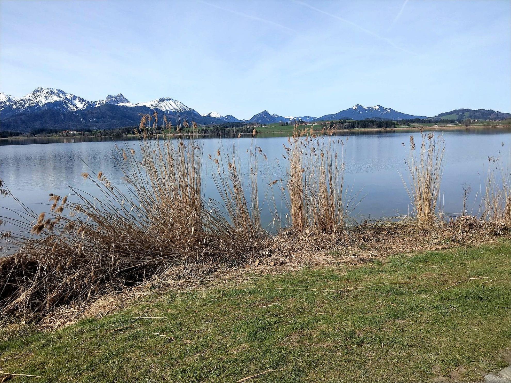 Der Blick auf die Berge vom Wanderweg um den Hopfensee im Allgäu aus.