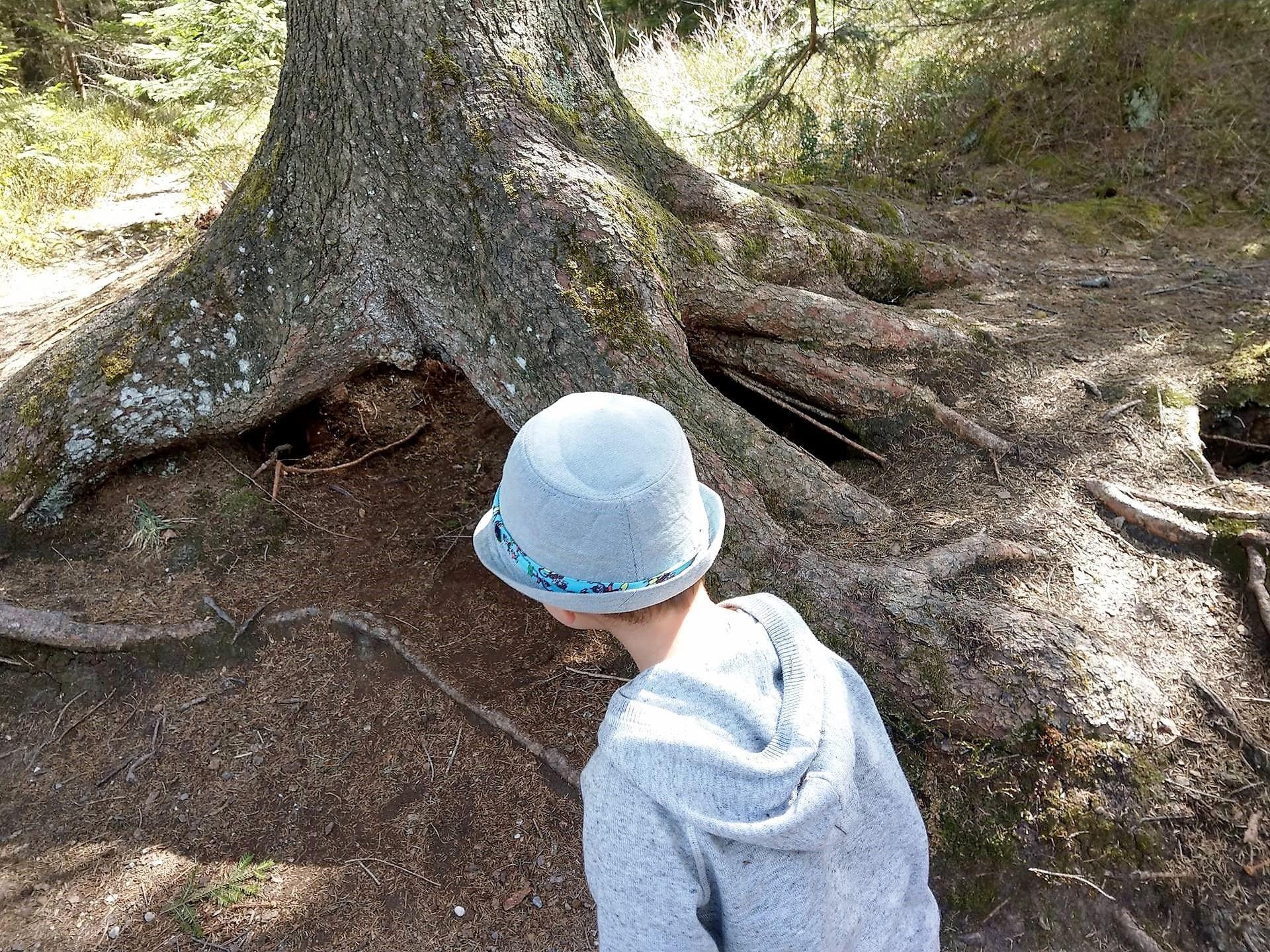 Beim Rundgang um den Hopfensee gibt es einiges zu entdecken. Wohnt da ein Zwerg? Warum ist ein Loch unter den Wurzeln?